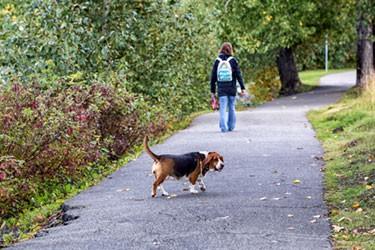 woman walking her basset hound